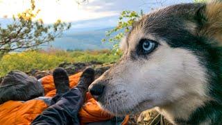 Mit Hunden im Wald übernachten - GRATIS Abenteuer ohne Zeitaufwand - 24 H BIWAK   Fabio Schäfer
