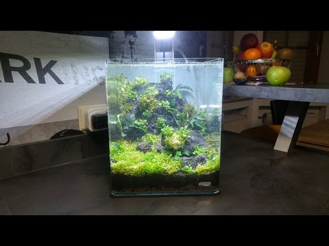 Setting up a planted nano aquascape |Timelapse