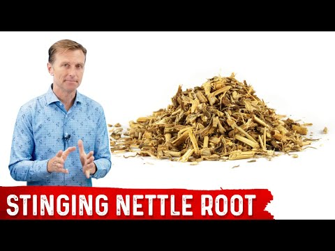 , title : '5 Benefits of Stinging Nettle Root