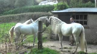 Jonathan Marshalls horses meeting each other for the first time