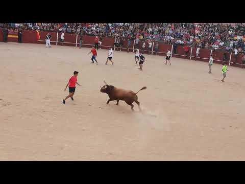 Encierro yuncos (Toledo) 15 09 2018