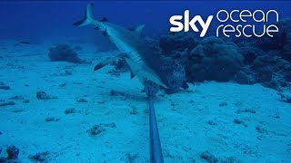 Deep Ocean Live: A look back at the dives in the Seychelles