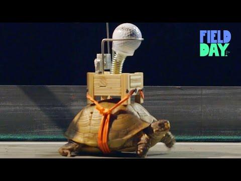 La máquina Rube Goldberg más lenta del mundo 1
