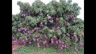 Chuyện lạ đời - Những trái cây lạ nhất quả đất có mặt ở Việt Nam
