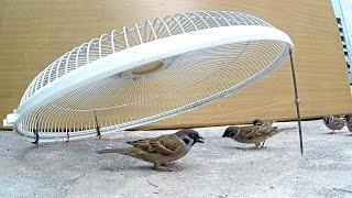 Electric fan guard bird trap