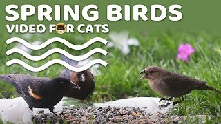 Bird Video for Cats - Spring Birds! Entertainment Video for Cats to Watch.