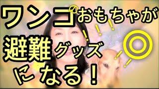 阪神大震災で被災経験者から伝授された、犬の玩具が災害避難グッズなるという驚き!?発想のの転換!今すぐ避難グッズに加えてほしい!/#49