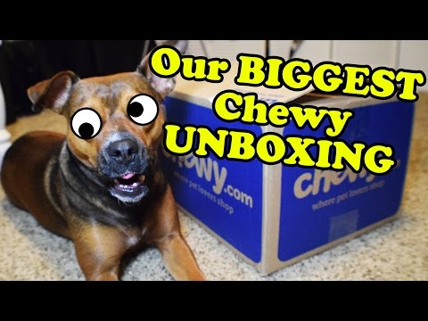 Chewy Haul Dog Toys UNBOXING Video - Dog Toy Reviews | Kong, Nylabone, JW, Outward Hound, Jolly Pets