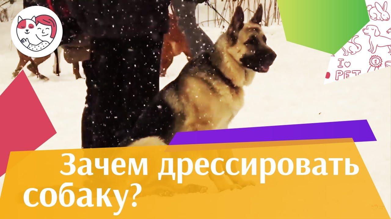 Почему необходимо дрессировать собаку?