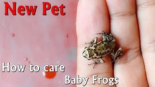 How to care baby frogs and make enclosure
