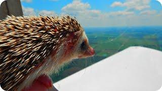 Прикольные Веселые Ежики! Funny Hedgehogs / Позитивное Видео :)