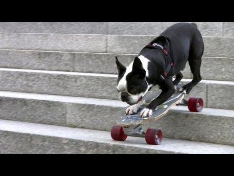 Hundesport: Brett statt Körbchen