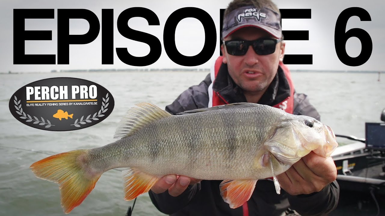 PERCH PRO 5 - Episode 6 - The Topwater War