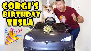 Surprise TESLA Mini Car For CORGI Dog's Birthday || Life After College: Ep. 665