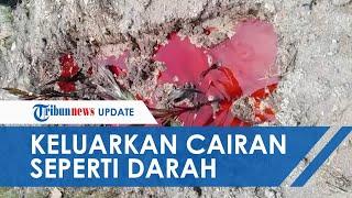 POPULER Viral Makam Digenangi Cairan Merah seperti Darah, Jemaah Melapor hingga Polisi Bertindak