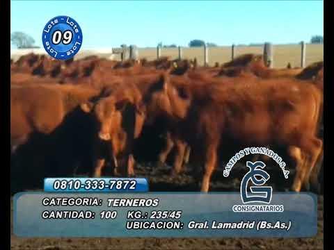 Lote Machos - Gral Lamadrid