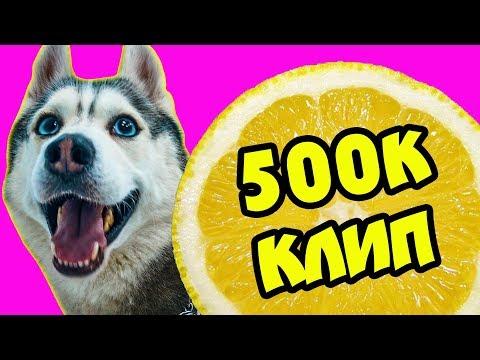 ПОЛ-ЛИМОНА У МЕНЯ! (Премьера клипа на 500.000 подписчиков) Хаски Бандит