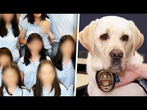 Meet Comfort Dog Helping Turpin Kids Cope