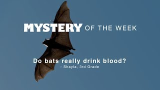 Do bats really drink blood?