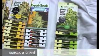 Львівські митники знайшли коноплі на 27 тисяч євро