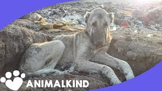 Landfill dogs desperate for help