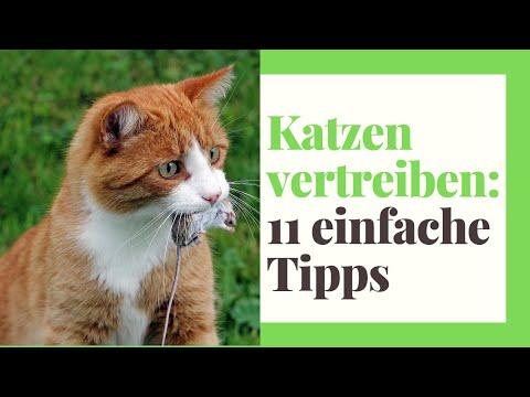 11 Tipps: Katzen vertreiben aus dem Garten