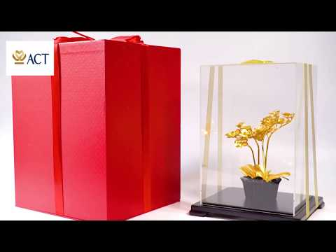 Lan Hồ Điệp 4 cành dát vàng size 24×22.5x26cm