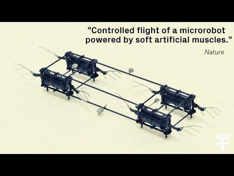 RoboBee fliegt trotz Kollision weiter