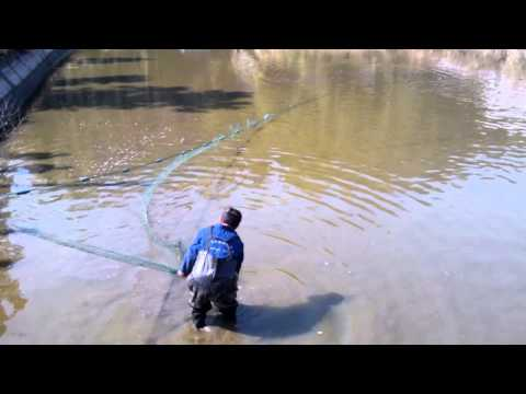 Fast Net Fishing in Pond Part 2