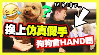 【Prank】Owner changed his hand to「Taobao's fake hand✋」,will the dogs be deceived?😂(Englsih)