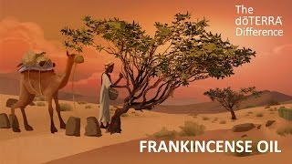 Frankincense the oil you'll love