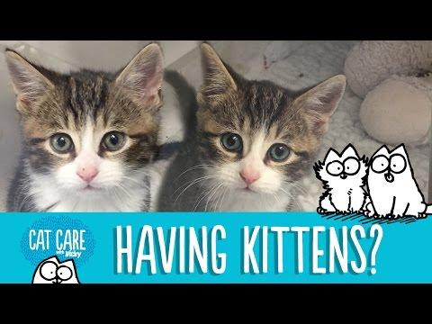 Adopting a Kitten? - Simon's Cat | CARE 101