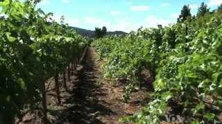 California Winemakers Target China