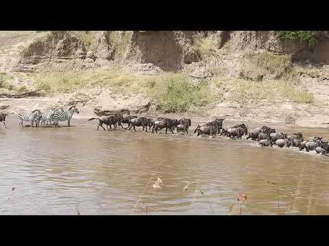 Global Vacanza Safaris
