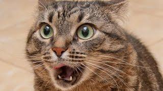 Коты разбойники 15 эп. Коты в шоке от новой игрушки. Лучшие приколы ноябрь 2016