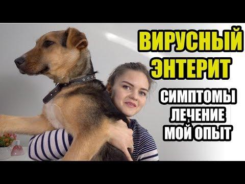 Парвовирусный энтерит у собак. НАШ ОПЫТ