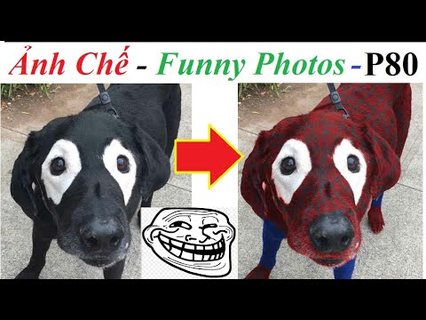 💥Ảnh Chế  – Spider Dog – Funny Photos (P 80) 💥 Top Comment, Photoshop Trolls