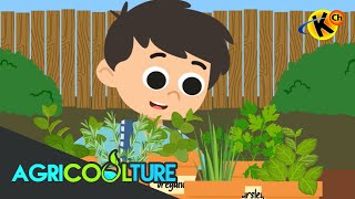 Grade 3 Science | Growing Herbs | Agricoolture