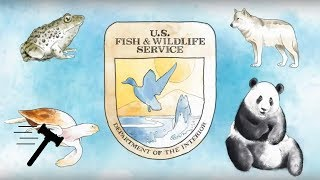 Click to play: Weyerhaeuser Company v. United States Fish and Wildlife Service [SCOTUSbrief]