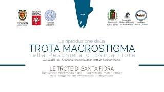 preview picture of video 'La Riproduzione della Trota Macrostigma nella Peschiera di Santa Fiora'