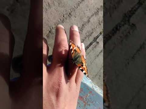 Весна на кончиках пальцев