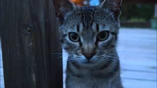 Johnny Cat- Stray Cat Strut - Time Lapse Photography