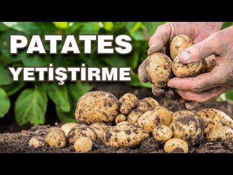 , title : 'Bahçede Patates Nasıl Yetiştirilir? Evde Patates Nasıl Ekilir? How to Grow Potatoes!