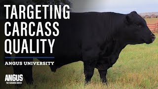 Breeding Cattle for Certified Angus Beef Premiums - Targeting the Certified Angus Beef Brand