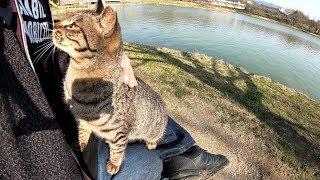 Seekor Kucing Liar Bercorak Harimau Mengendarai Lutut