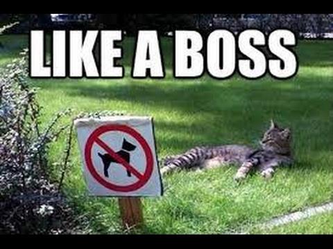 ПОДБОРКА ПРИКОЛОВ #15 / best fails compilation - like a boss