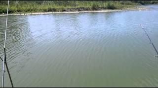 Платная рыбалка в светлогорске калининградской области