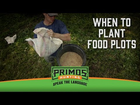When To Plant Food Plots video thumbnail