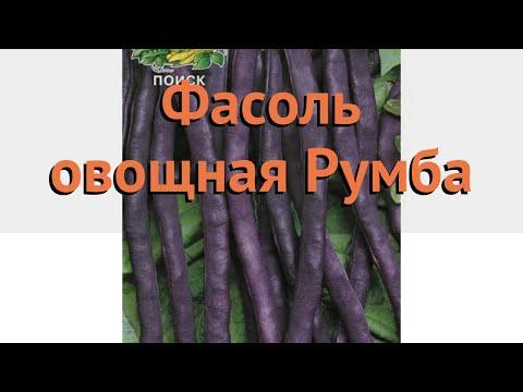 Фасоль овощная Румба (rumba) 🌿 овощная фасоль Румба обзор: как сажать, семена фасоли Румба