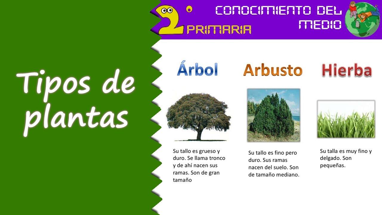 Cono, 2º Primaria. Tema 6. Tipos de plantas